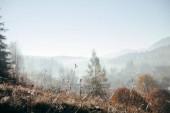 """Постер, картина, фотообои """"крупным планом выстрелил растений на холме с туманные горы на фоне, Карпаты, Украина"""""""