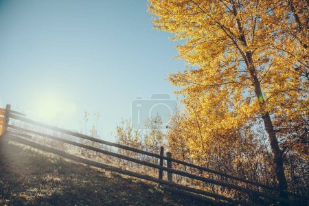 scenic view of wooden fence on hill with yellow tree in front of shining sun, Carpathians, Ukraine