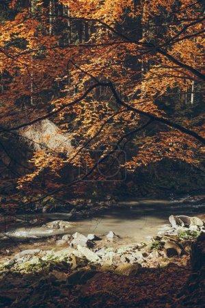 Photo pour Rivière de montagne rapide dans la forêt automnale, Carpates, Ukraine - image libre de droit