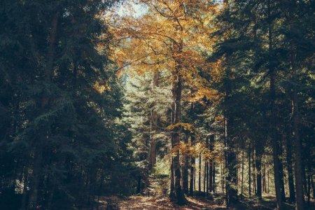 autumnal scenic mountain forest in Carpathians, Ukraine
