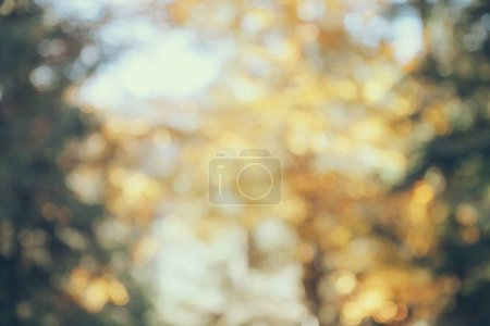 Photo for Blurred shot of autumnal forest for background - Royalty Free Image