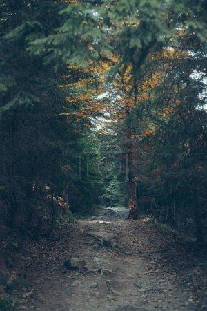 Photo pour Vue spectaculaire sur la belle forêt verte des Carpates, Ukraine - image libre de droit
