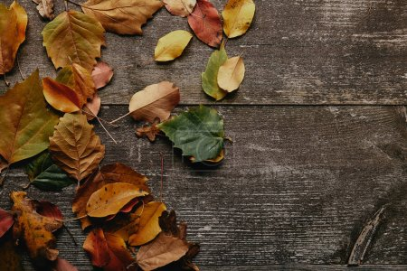 flat lay with colorful fallen leaves on wooden surface