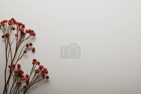 Photo for Top view of red holly berries on white background - Royalty Free Image