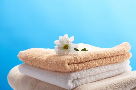 close-up view of beautiful white chamomile flower on pile of clean towels isolated on blue