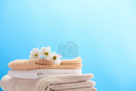 vista de cerca de hermosas manzanillas en la pila de toallas suaves limpias aisladas en azul