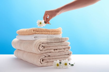 cropped shot of person putting chamomile on pile of towels on blue