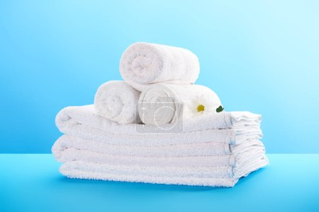close-up view of rolled and stacked clean towels with beautiful white chamomile flower on blue