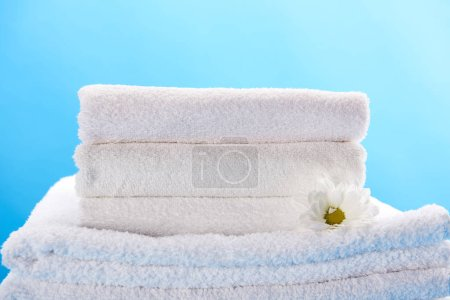 pile of clean soft white towels and beautiful chamomile flower isolated on blue