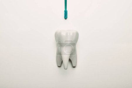top view of tooth model and toothbrush on white backdrop