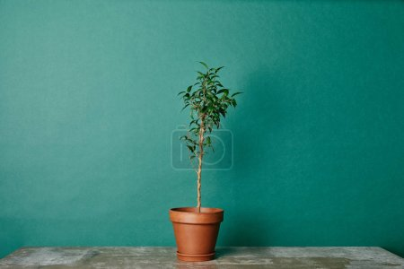 Photo for Plant in flowerpot on table on green background - Royalty Free Image