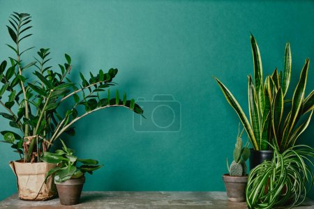 Photo for Different plants on rusty table on green background - Royalty Free Image