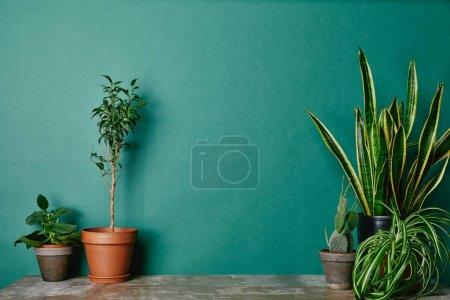 Various plants in flowerpots on green background