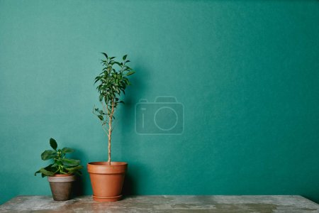 Two plants in flowerpots on green background