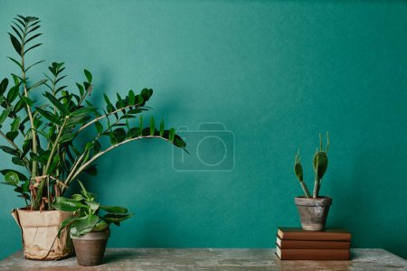 Various plants in pots and books on green background