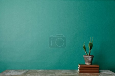 Cactus plant on books on green background