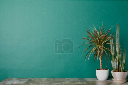 Two plants in pots on dusty table on green background