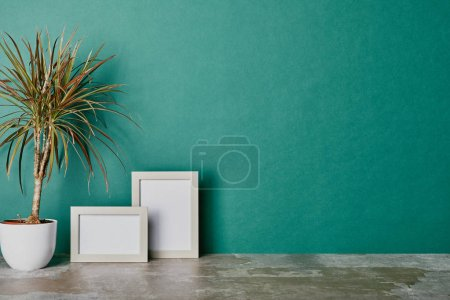 Plant in flowerpot and photo frames on green background