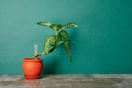 Photo for Plant in orange flowerpot on green background - Royalty Free Image