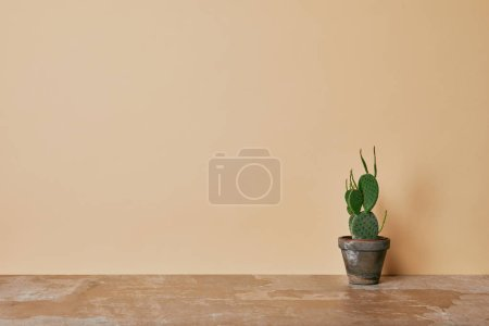 Cactus in flowerpot on dusty table on beige background