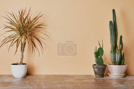 Plants in flowerpots on dusty table on beige background