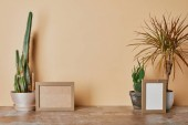 Empty photo frames and different plants on dusty table on beige background