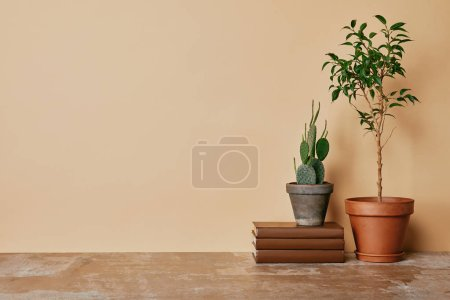 Plants in pots and books at table on beige background