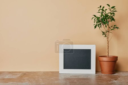 White empty photo frame and plant in flowepot on beige background