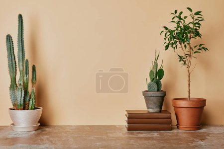 Photo for Different plants and books on beige background - Royalty Free Image