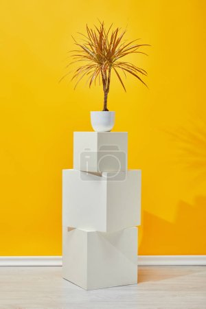 Photo for Houseplant in flowerpot on white plaster cubes near yellow wall - Royalty Free Image