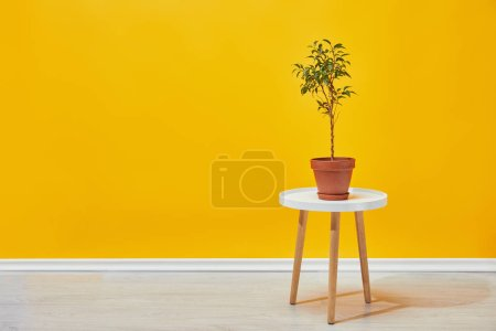 plant in flowerpot on little wooden table with yellow wall at background