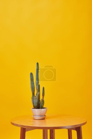 Cactus in flowerpot at wooden coffee isolated on yellow