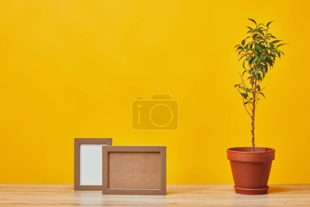 Empty photo frames and plant in pot at wooden table isolated on yellow