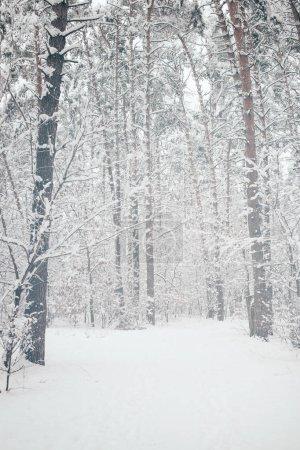 malerischer Blick auf schneebedeckte Bäume im Winterwald