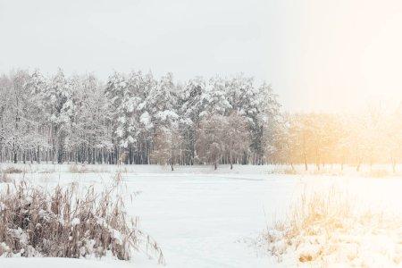 Photo pour Vue panoramique sur les arbres enneigés avec éclairage latéral dans la forêt d'hiver - image libre de droit