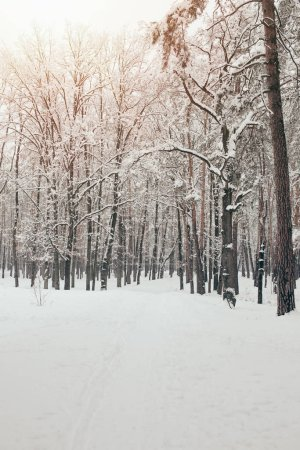 Photo for Scenic view of snowy trees in winter forest - Royalty Free Image