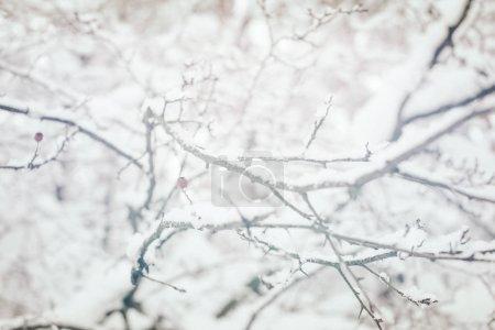 Photo pour Vue rapprochée des brindilles couvertes de neige dans la forêt d'hiver - image libre de droit