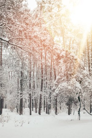 scenic view of beautiful snowy winter forest with sunlight