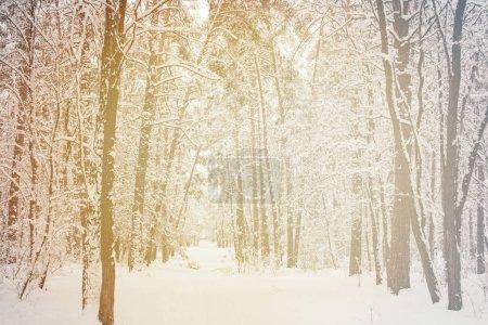 Photo pour Tonique image d'hiver neigeux belle forêt - image libre de droit