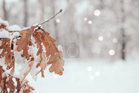 scenic view of oak leaves with snow in winter forest and blurred falling snowflakes