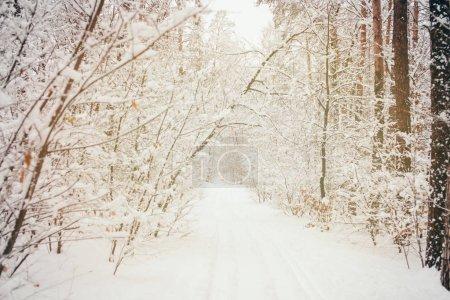 Photo pour Image tonique de belle forêt enneigée d'hiver - image libre de droit