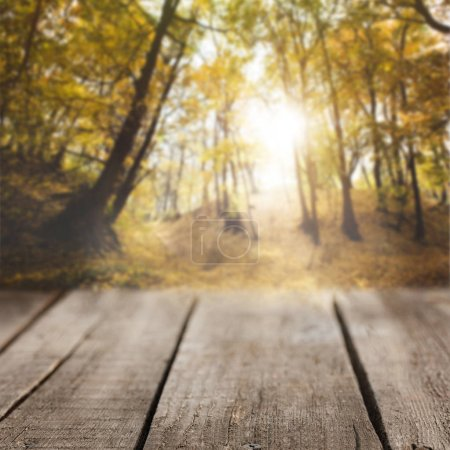 Photo for Striped wooden background on beautiful autumnal forest wallpaper - Royalty Free Image