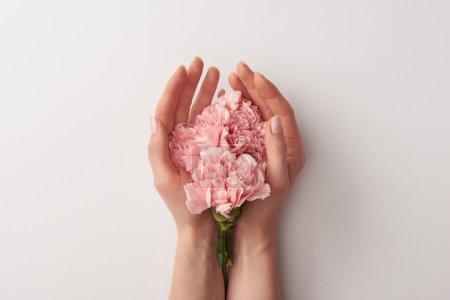 Photo pour Photo recadrée de femme tenant des belles fleurs roses isolés sur fond gris - image libre de droit