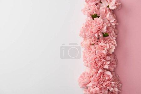 Photo pour Vue de dessus de belles fleurs oeillets roses isolé sur fond gris - image libre de droit
