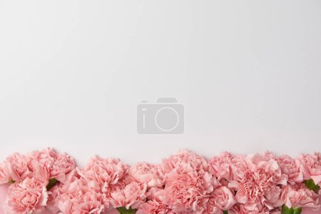 Photo for Top view of beautiful tender carnation flowers isolated on grey background - Royalty Free Image