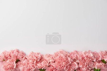 Foto de Vista superior de tiernos claveles flores aislados en fondo gris - Imagen libre de derechos