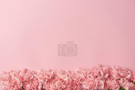 Foto de Vista superior de tiernos claveles flores aisladas sobre fondo rosa - Imagen libre de derechos