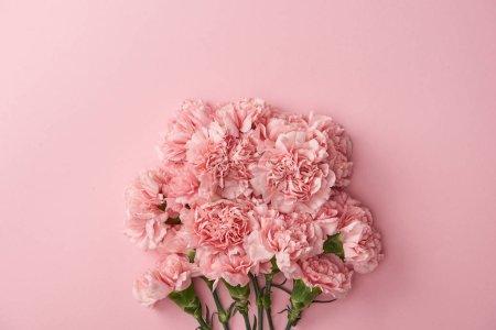 Foto de Hermosas flores claveles rosa aisladas sobre fondo rosa - Imagen libre de derechos