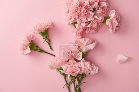 Photo for Top view of beautiful pink carnation flowers isolated on pink background - Royalty Free Image
