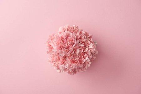 Photo pour Vue de dessus de belles fleurs oeillets roses tendres isolé sur fond rose - image libre de droit